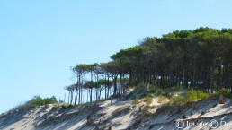 photographie art dune
