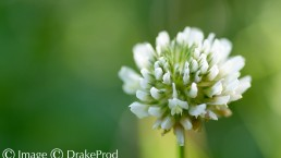 art macrophotographie fleur blanche