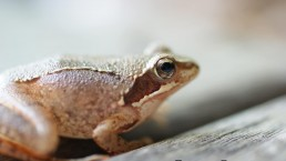 art macrophotographie grenouille
