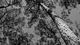 photographie art monochrome canopée