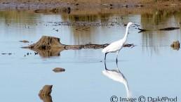 photographie art oiseau eau
